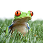 frog_in_grass_smaller