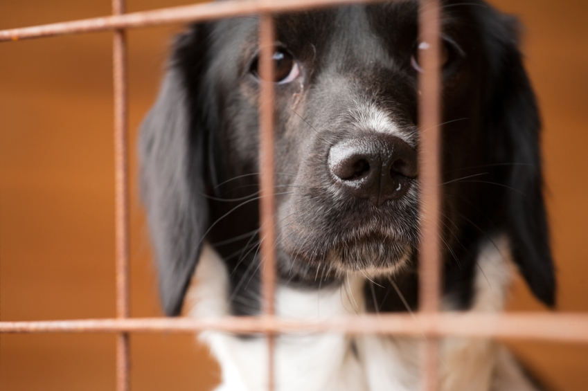 dog behind bars